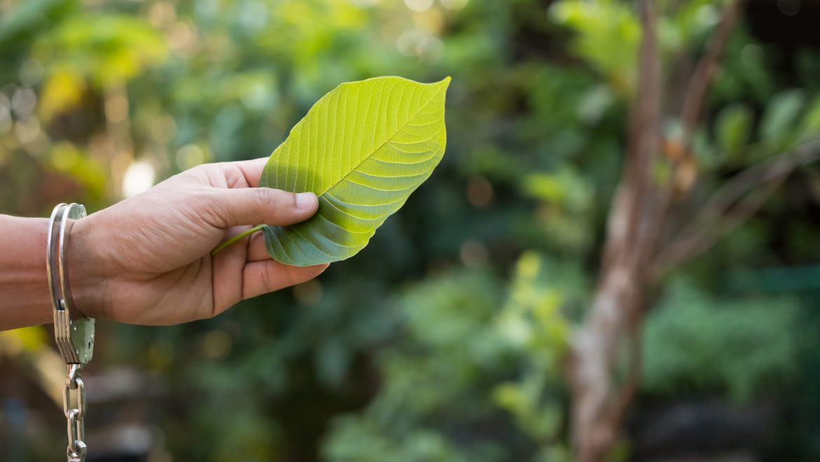 What is Kratom Powder and why would someone use it?